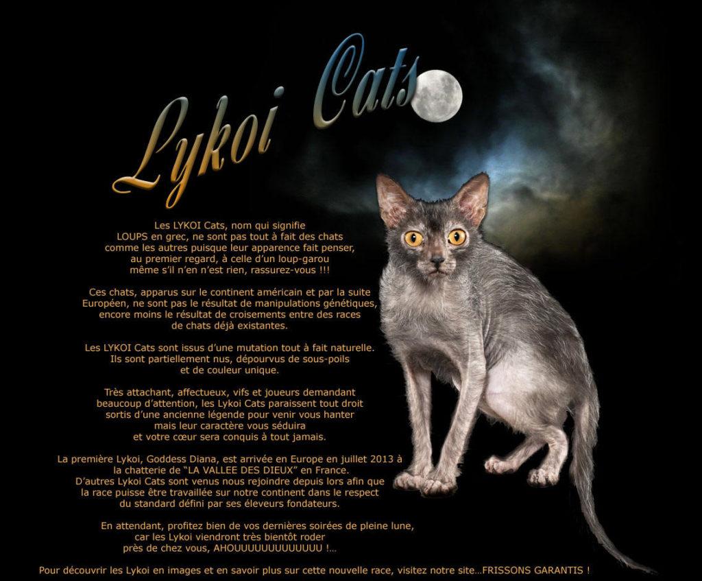 Lykoi Cats France French Lykloi breder Christine Boulanger De La Vallee Des Dieux